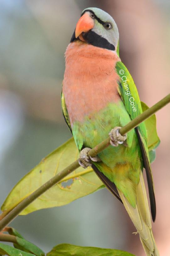 Birds Changi-01