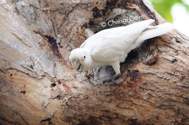 Birds Changi-05