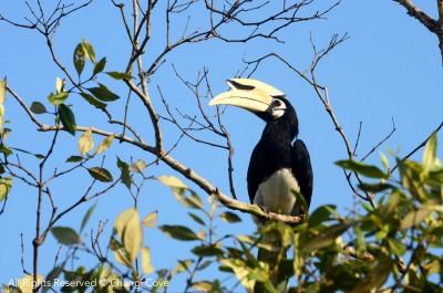 whatshere_birdwatching